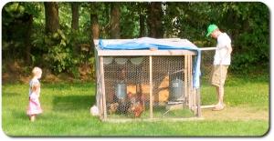 website town chickens